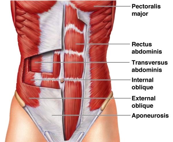 Kako rade trbušni mišići