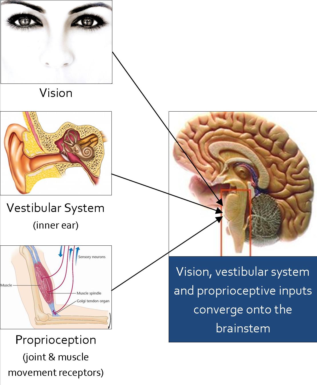propriocepcija